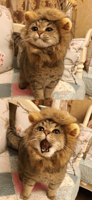 Target, Tumblr, and Blog: justcatposts:he roar