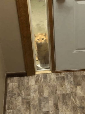 justcatposts:  I meowed at our neighbor's cat once and now it regularly comes up to our door and just watches us live our lives. (via): justcatposts:  I meowed at our neighbor's cat once and now it regularly comes up to our door and just watches us live our lives. (via)