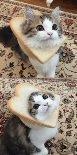 Target, Tumblr, and Blog: justcatposts:she bread