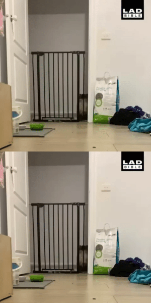 justcatposts:  This cats peculiar jumping style(Source)- via @theladbible: justcatposts:  This cats peculiar jumping style(Source)- via @theladbible