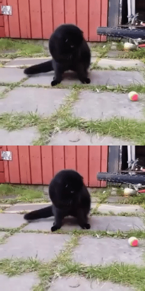 justcatposts:  Wait, where did the ball go?: justcatposts:  Wait, where did the ball go?