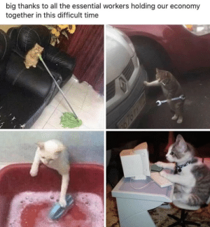justcatposts:  We can always rely on cats: justcatposts:  We can always rely on cats