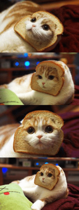 justcatposts:  You have been visited by the bread catThis special kind of cat brings good luck and fortune: justcatposts:  You have been visited by the bread catThis special kind of cat brings good luck and fortune