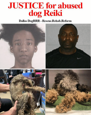 Memes, News, and Police: JUSTICE for abused  dog Reiki  Dallas DogRRR -Rescue.Rehab.Reform Another cruelty case from the rescuers at Dallas Dog RRR! Reiki will have his voice heard! He was brought into the shelter the owner said he was hit by a car, they took him to the vet and refused to pay for the medical care. When in reality he was starved, soaked in his urine, he was matted with sores all over his body!  They basically STARVED him, they allowed this to happen they watched it happen and DID NOTHING!  After seeing him Patti Dawson, Dallas DogRRR founder, called the detective and the shelter and demanded and investigation!  Well Patti Dawson got it and she will get JUSTICE for Reiki we will be his voice his owners have been arrested!  A Fort Worth pair were arrested Sunday after they surrendered an emaciated 6-year-old poodle who was too weak to stand, police said.  Here is the news article from his case! https://www.dallasnews.com/…/jailed-fort-worth-couples-emac…  Support their mission  Donate www.dallasdogrrr.org Paypal donate@dallasdogrrr.org  Venmo @Dallas-DogRRR  #dallasdogrrr #dogrrrnation #animalneglect #animalcruelty #voiceofthevoiceless