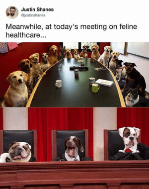 Dank, 🤖, and Cat: Justin Shanes  @justinshanes  Meanwhile, at today's meeting on feline  healthcare... Final Solution to the cat question.