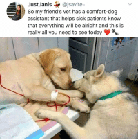 Friends, Memes, and Today: JustJanis@jsavite  So my friend's vet has a comfort-dog  assistant that helps sick patients know  that everything will be alright and this is  really all you need to see today Y the hell havent u followed @kalesaladanimals yet