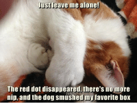 Boxing, Memes, and Nore: Justleave me alone!  The red dot disappeared,there's no nore  nip, and the dog Smushed my favorite box Yes, it's been one of those days.....