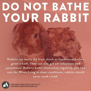 justwritingscibbles:  mypasteluniverse:  gossamerglitch:  shelbydoesnotpwn:  amazingatheist:  maitaijulie:  aviculor:  important psa about buns  We raised rabbits when I was a child and my sister gave a rabbit a bath (she was 5) and it died..so heed this instruction.  I wasn't going to reblog this, but then I realized I might save a rabbit.  This is important guys. If your rabbit gets into something gnarly and you HAVE to bathe them:1. Fill a bowl with warm water.2. Get a washcloth. Put it in the water. Squeeze it out until it is just damn.3. Lightly scrub the dirty area on your bun.4. That is it. DO NOT get your bun wet. Only slightly damp on the part that was dirty.(source)  VERY IMPORTANT! SAVE A BUNS LIFE!   Do not bathe your bun!!!!  Boosting!    For Daisy: justwritingscibbles:  mypasteluniverse:  gossamerglitch:  shelbydoesnotpwn:  amazingatheist:  maitaijulie:  aviculor:  important psa about buns  We raised rabbits when I was a child and my sister gave a rabbit a bath (she was 5) and it died..so heed this instruction.  I wasn't going to reblog this, but then I realized I might save a rabbit.  This is important guys. If your rabbit gets into something gnarly and you HAVE to bathe them:1. Fill a bowl with warm water.2. Get a washcloth. Put it in the water. Squeeze it out until it is just damn.3. Lightly scrub the dirty area on your bun.4. That is it. DO NOT get your bun wet. Only slightly damp on the part that was dirty.(source)  VERY IMPORTANT! SAVE A BUNS LIFE!   Do not bathe your bun!!!!  Boosting!    For Daisy