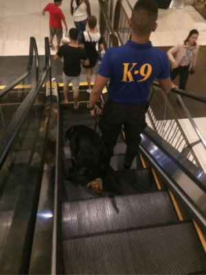 Doggo, Bomb, and K-9: K-9 doggo drops a bomb without handler noticing at an escalator