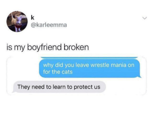 Cats, Boyfriend, and Irl: k  @karleemma  is my boyfriend broken  why did you leave wrestle mania on  for the cats  They need to learn to protect us Me_irl