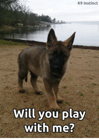 Memes, Instinctive, and 🤖: K9 Instinct  Will you play  with me? <3