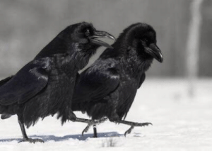 Kaayvan shrike and Kadus of the raven guard share some light banter after the return of their primarch Corvus Corax: Kaayvan shrike and Kadus of the raven guard share some light banter after the return of their primarch Corvus Corax