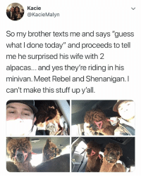 "Wtf, Guess, and Stuff: Kacie  @KacieMalyn  So my brother texts me and says ""guess  what I done today"" and proceeds to tell  me he surprised his wife with 2  alpacas... and yes they're riding in his  minivan. Meet Rebel and Shenanigan. I  can't make this stuff upy'all. ummmm, wtf"