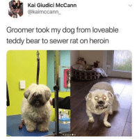 sewer: Kai Giudici McCann  @kaimccann_  Groomer took my dog from loveable  teddy bear to sewer rat on heroin