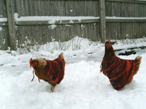 kaible:  things are awful and will remain awful for a very long time so here is a picture of two chickens with little handmade knitted capes on. Someone must love these chickens a lot to make them little chicken capes. They look so warm and lovely in their little chicken capes. : kaible:  things are awful and will remain awful for a very long time so here is a picture of two chickens with little handmade knitted capes on. Someone must love these chickens a lot to make them little chicken capes. They look so warm and lovely in their little chicken capes.