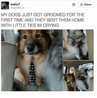 All I see are poof balls with ties ~N noelletheadmin positivenewsmonday: kaitly?  Follow  @pumpkn pi  MY DOGS JUST GOT GROOMED FOR THE  FIRST TIME AND THEY SENT THEM HOME  WITH LITTLE TIES IM CRYING All I see are poof balls with ties ~N noelletheadmin positivenewsmonday