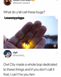 Fam, Memes, and 🤖: @kaiyah_baiyah  What do y'all call these bugs?  Lmaomyynigga  sigh  @raynasty.  Owl City made a whole bop dedicated  to these things and if you don't call it  that, I can't fw you fam 😩