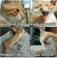 Indonesian (Language) and Heheh: kalonadntuK  ga perlu mikirin  ugas heheh