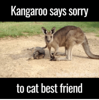 Dank, 🤖, and Cat: Kangaroo says sorry  to cat best friend He played a little rough and wanted to apologise 😂😂🙌
