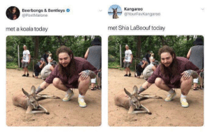 JUST DO IT! by Rude1231 FOLLOW 4 MORE MEMES.: Kangaroo  @YourFavKangaroo  Beerbongs & Bentleys  @PostMalone  met Shia LaBeouf today  met a koala today JUST DO IT! by Rude1231 FOLLOW 4 MORE MEMES.