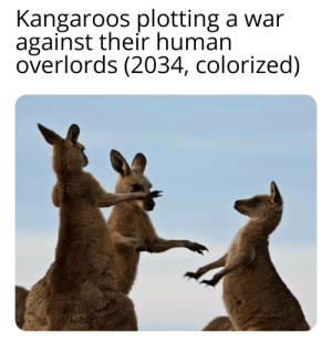Human, War, and Boing: Kangaroos plotting a war  against their human  overlords (2034, colorized) I go boing boing