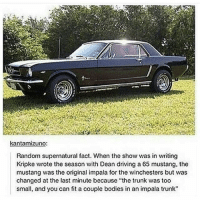 """spn Supernatural spnfamily jaredpadalecki jensenackles mishacollins sam dean winchesters castiel destiel fandom ship otp: kantamizuno:  Random supernatural fact. When the show was in writing  Kripke wrote the season with Dean driving a 65 mustang, the  mustang was the original impala for the Winchesters but was  changed at the last minute because """"the trunk was too  small, and you can fit a couple bodies in an impala trunk"""" spn Supernatural spnfamily jaredpadalecki jensenackles mishacollins sam dean winchesters castiel destiel fandom ship otp"""