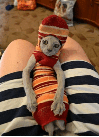 Tumblr, Blog, and Free: kaptincrunchh:  MASTER HAS GIVEN DOBBY A SOCK!   DOBBY IS FREE!!!