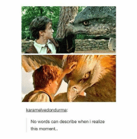 Harry Potter, Instagram, and Memes: karamelvedondurma:  No words can describe when i realize  this moment ⠀⠀⠀⠀↡ Harry Potter or Fantastic Beasts? + Followers; 100k!! + © ThePhilosopherStones | Instagram | 2017