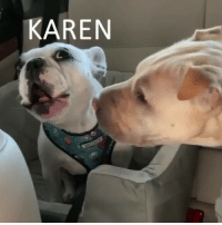 Funny, Translation, and What: KAREN Finally we have a translation of what Walter was saying🤣🤣 soundon🔊 VidVia @doggosbeingdoggos2