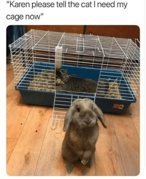 """Cat, Please, and Cage: """"Karen please tell the cat I need my  cage novW"""