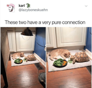 Pure, Such, and Cuties: karl  @lazyboneskuehn  These two have a very pure connection Both such cuties