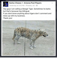Memes, Thank You, and Arizona: Karloz Chavez Arizona Pool Players  Yesterday at 2:12 PM , Phoenix, AZ . M  8a  Hey guys I am selling a Bengal Tiger. Sometimes he barks  but that's because hes bilingual.  If you dont know anything about tigers don't comment and  mess up with my business.  Thank you! Anyone interested?