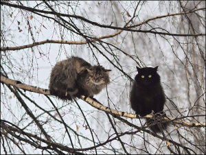 karnythia:  salparadisewasright:  faethverity: These are not owls. are you sure  When you're switching forms and get confused….the drunk witch chronicles.  : karnythia:  salparadisewasright:  faethverity: These are not owls. are you sure  When you're switching forms and get confused….the drunk witch chronicles.