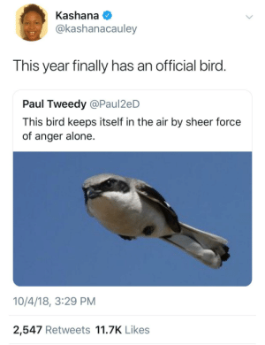 This year can suck it by thecatsmilkdish MORE MEMES: Kashana  @kashanacauley  This year finally has an official bird  Paul Tweedy @Paul2eD  This bird keeps itself in the air by sheer force  of anger alone.  10/4/18, 3:29 PM  2,547 Retweets 11.7K Likes This year can suck it by thecatsmilkdish MORE MEMES
