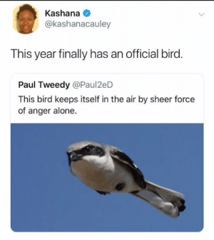Being Alone, Been, and Air: Kashana  @kashanacauley  This year finally has an official bird.  Paul Tweedy @Paul2eD  This bird keeps itself in the air by sheer force  of anger alone. It's been that kind of year