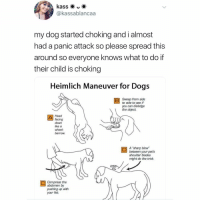 """Be. A. Good. Parent. (Call your vet right away) Twitter kassablancaa: @kassablancaa  my dog started choking and i almost  had a panic attack so please spread this  around so everyone knows what to do if  their child is choking  Heimlich Maneuver for Dogs  Sweep from side  to side to see if  you can dislodge  the object  Head  facing  down  like a  wheel  barrow  A """"sharp blow  between your pet's  shoulder blades  might do the trick.  Compress the  abdomen by  pushing up with  your fist Be. A. Good. Parent. (Call your vet right away) Twitter kassablancaa"""