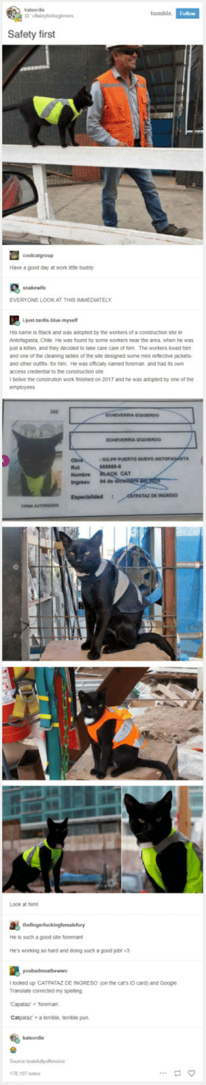 """Cats, Google, and Work: kateordie  tumbl  Follow  Safety first  Have a good day at work little buddy  snakewife  EVERYONE LOOK AT THIS IMMEDIATELY  i-just-tardis-blue-myself  His name is Black and was adopted by the workers of a construction site in  Antofagasta, Chile. He was found by some workers near the area, when he was  just a kitten, and they decided to take care care of him. The workers loved him  and one of the cleaning ladies of the site designed some mini reflective jackets-  and other outfrits- for him. He was officialy named foreman and had its own  access credential to the construction site  l belive the constrution work finished on 2017 and he was adopted by one of the  266  ECHEVERRIA EQUIERDO  :O0PP PUERTO NUEVO  Rut  CAT  Ingreso 04 de  TPATAZ DE INGRES0  Look at him  He is such a good site foreman  He's working so hard and doing such a good jobl <3  I looked up """"CATPATAZ DE INGRESO (on the cat's ID card) and Google  Translate corrected my spelling  Capataz forema  Catpataz a terrible, terrible pun.  kateordie  178,197 notes Foreman Black"""