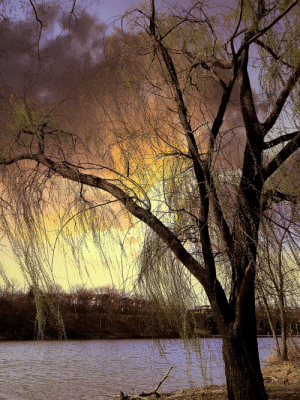 Taken, Tumblr, and Blog: katgail: Colors passing over the Weeping Willow  By Kathy Gail  One of my favorite tree captures taken last year…