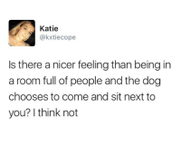 MeIRL, Dog, and Next: Katie  akxtiecope  Is there a nicer feeling than being in  a room full of people and the dog  chooses to come and sit next to  you? I think not Meirl