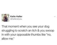 """Scratch, MeIRL, and Dog: Katie Haller  @halleratyou  That moment when you see your dog  struggling to scratch an itch & you swoop  in with your opposable thumbs like """"no,  allow me."""" meirl"""