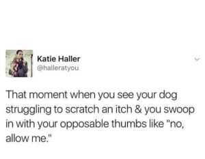 "meirl: Katie Haller  @halleratyou  That moment when you see your dog  struggling to scratch an itch & you swoop  in with your opposable thumbs like ""no,  allow me."" meirl"