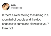 Humans of Tumblr, Dog, and Next: Katie  @kxtiecope  Is there a nicer feeling than being in a  room full of people and the dog  chooses to come and sit next to you?  think not