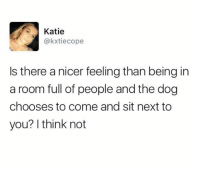 Dank, 🤖, and Dog: Katie  @kxtiecope  Is there a nicer feeling than being in  a room full of people and the dog  chooses to come and sit next to  you? I think not That'd be the greatest honor.