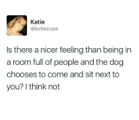 Memes, 🤖, and Dog: Katie  @kxtiecope  Is there a nicer feeling than being in  a room full of people and the dog  chooses to come and sit next to  you? I think not That'd be the greatest honor.