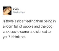 Memes, 🤖, and Dog: Katie  okxtiecope  Is there a nicer feeling than being in  a room full of people and the dog  chooses to come and sit next to  you? I think not