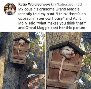 """Grandma, Love, and Molly: Katie Wojciechowski @katiesays 2d  My cousin's grandma Grand Maggie  recently told my aunt """"I think there's an  opossum in our owl house"""" and Aunt  Molly said """"what makes you think that?""""  and Grand Maggie sent her this picture thiscoulddefinealifetime: elodieunderglass:  cipheramnesia:  whitepeopletwitter:  I think I see it  it's an opossum house now  Grand Maggie is very good at generating Highly Relatable Content   I love how Grand Maggie sounds like either some sort of mage or beauty pageant rank."""