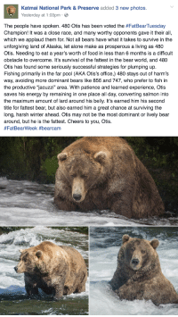 "Being Alone, Animals, and Bad: Katmai National Park&Preserve added 3 new photos.  Yesterday at 1:03pm-  The people have spoken. 480 Otis has been voted the #FatBearTuesday  Champion! It was a close race, and many worthy opponents gave it their all,  which we applaud them for. Not all bears have what it takes to survive in the  unforgiving land of Alaska, let alone make as prosperous a living as 480  Otis. Needing to eat a year's worth of food in less than 6 months is a difficult  obstacle to overcome. It's survival of the fattest in the bear world, and 480  Otis has found some seriously successful strategies for plumping up.  Fishing primarily in the far pool (AKA Otis's office,) 480 stays out of harm's  way, avoiding more dominant bears like 856 and 747, who prefer to fish in  the productive ""jacuzzi"" area. With patience and learned experience, Otis  saves his energy by remaining in one place all day, converting salmon into  the maximum amount of lard around his belly. It's earned him his second  title for fattest bear, but also earned him a great chance at surviving the  long, harsh winter ahead. Otis may not be the most dominant or lively bear  around, but he is the fattest. Cheers to you, Otis.  <p><a href=""https://i-am-jayde.tumblr.com/post/167916115551/triplehamburgerjack-rosepetalbath-im-proud"" class=""tumblr_blog"">i-am-jayde</a>:</p><blockquote> <p><a class=""tumblr_blog"" href=""http://triplehamburgerjack.tumblr.com/post/152159094071"">triplehamburgerjack</a>:</p> <blockquote> <p><a class=""tumblr_blog"" href=""http://rosepetalbath.tumblr.com/post/152037603835"">rosepetalbath</a>:</p> <blockquote> <p>I'm proud of him</p> </blockquote> <p>He is just fucking great.</p> </blockquote> <p>Fat pets who are obviously unhealthy:  Bad</p> <p>Wild animals who are fat because of humans:  Bad</p> <p>Wild animals who are supposed to be fat:  Good</p> <p>Wild animals who have gotten super fat because they're just that good at survival:  Very Good</p> </blockquote>"