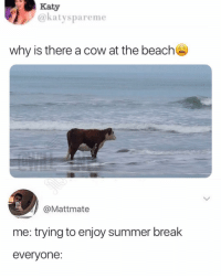 Lmao, Memes, and Summer: Katy  @katyspareme  why is there a cow at the beach  @Mattmate  me: trying to enjoy summer brealk  everyone: Lmao