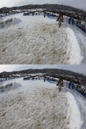 katy-l-wood: gallusrostromegalus:   katy-l-wood:  gallusrostromegalus:  katy-l-wood: Awww yes, it's  skijoring  season in Colorado. I hope I get to go watch this year. How the chicken-fried FUCK did I not know about this before? I am delighted.  It is DELIGHTFUL fun. Apparently it's a Scandinavian thing and some cultures over in that part of the world use reindeer. Not sure who brought it over to Colorado or when, but it sure is popular.   Ok but if we really want to make this Peak Colorado: We gotta.    I 100% agree with this line of reasoning.  : katy-l-wood: gallusrostromegalus:   katy-l-wood:  gallusrostromegalus:  katy-l-wood: Awww yes, it's  skijoring  season in Colorado. I hope I get to go watch this year. How the chicken-fried FUCK did I not know about this before? I am delighted.  It is DELIGHTFUL fun. Apparently it's a Scandinavian thing and some cultures over in that part of the world use reindeer. Not sure who brought it over to Colorado or when, but it sure is popular.   Ok but if we really want to make this Peak Colorado: We gotta.    I 100% agree with this line of reasoning.