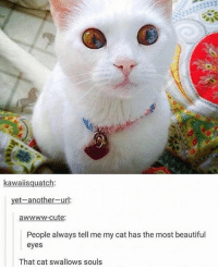 what benefits do I get if I voluntarily sell my soul to it - Max textpost textposts: kawaiisquatch:  et-another-ur  awwww-cute  People always tell me my cat has the most beautiful  eyes  That cat swallows souls what benefits do I get if I voluntarily sell my soul to it - Max textpost textposts